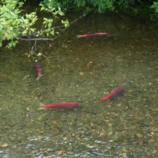 Salmon Smarts